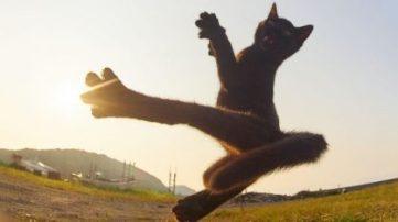 ninja-cats1-2-418x235