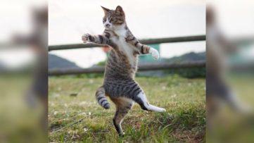 ninja-cats3-768x432