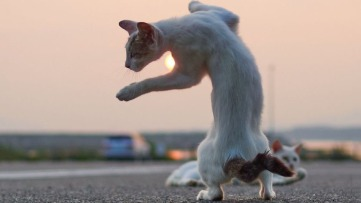 ninja-cats4