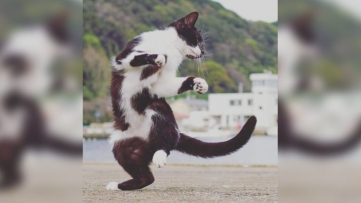 ninja-cats6-768x432