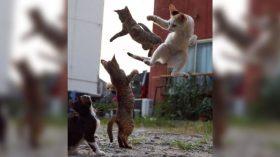 ninja-cats8-768x432